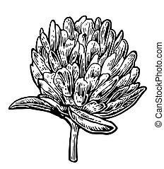 vendange, illustration, vecteur, fond, blanc, clover.