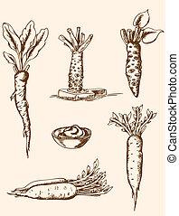 vendange, main, racines, dessiné
