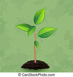 vendange, plante, arrière-plan vert