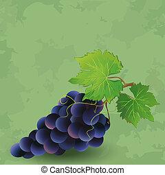 vendange, raisin, fond, noir