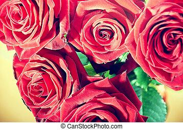 vendange, roses