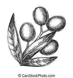 vendemmia, albero, vettore, ramo, oliva, agricolo