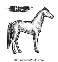 vendemmia, cavallo, o, schizzo, cavalla, criniera