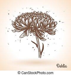 vendemmia, flowers., disegno, fondo, mano