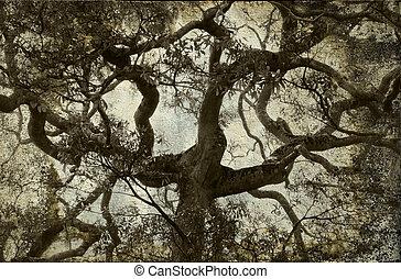 vendemmia, ramo albero, fondo