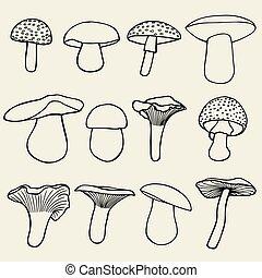 vendemmia, set, mushrooms., varietà