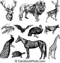 vendemmia, vettore, set, animale