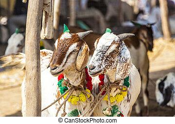 vender, bazar, cabras
