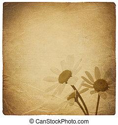 vendimia, camomila, flores, fondo., aislado, en, white.