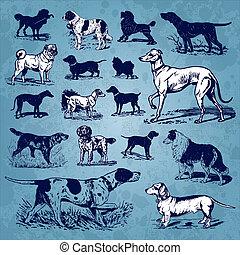 vendimia, conjunto, perros, (vector)