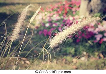 vendimia, flores del resorte