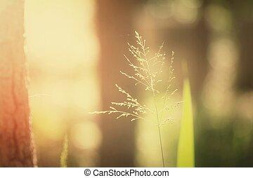 vendimia, flores, primavera
