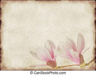 vendimia, magnolias, papel, viejo, plano de fondo