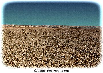vendimia, negev, israel., imagen, desierto