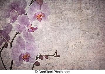 vendimia, orquídeas