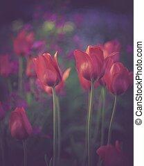 vendimia, rojo, tulipanes, flores