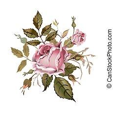 vendimia, rosa, rose., aislado, en, white.