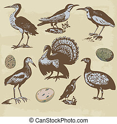 vendimia, vector, conjunto, aves, illustrations.