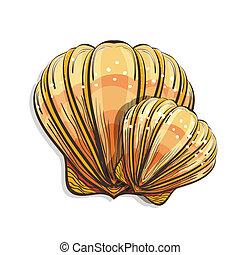 venera, concha marina