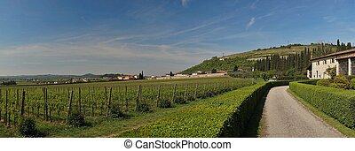 Veneto region summer wineyards