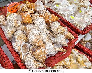 Sea shells for sale in a souvenir shop