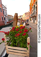 Venice Italy red chili pepper plant