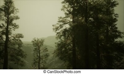 venir, arbres pin, orage, brouillard, flanc montagne, ...