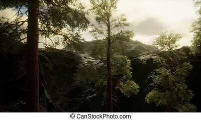 venir, brouillard, flanc montagne, arbres pin, orage, ...