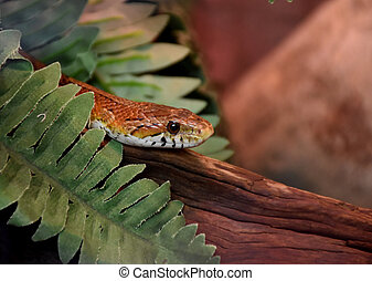 Venomous Snake On a Piece of Wood