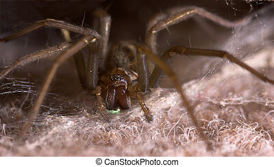 Venomous Spider - A spider with a venomously green glow...