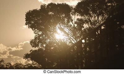 vent, arbres, rustling, grand