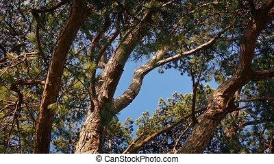 vent, fort, jour ensoleillé, arbres