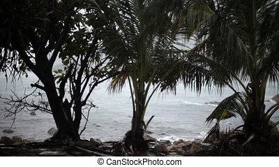 vent, mer, cyclone, tropiques