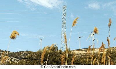 vent, roseaux, moulin