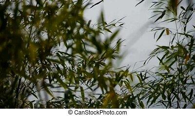 vent, secousse, bambou,