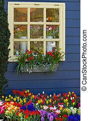 ventana, con, flores coloridas, en, primavera