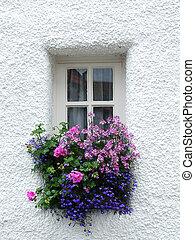 ventana, diminuto, escocés