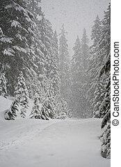 ventisca, bosque, pino