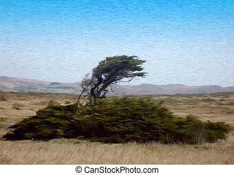 ventoso, árbol, costa