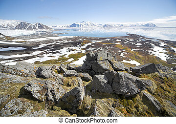 verão, ártico, paisagem