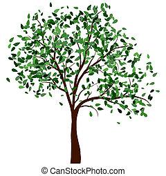 verão, árvore