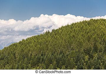 verão, aéreo, floresta, vista