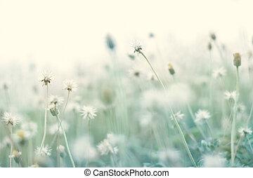 verão, abstratos, cor pastel, natureza, fundo, com, secos, flor, em, a, prado, macio, e, borrão, filtro, imagem