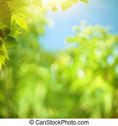 verão, abstratos, natural, fundos, foliage