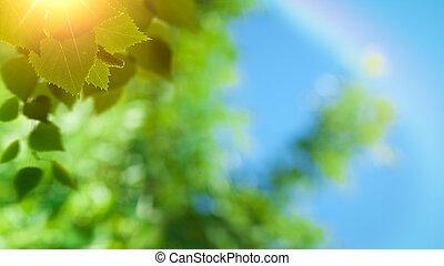 verão, abstratos, natural, fundos, primavera