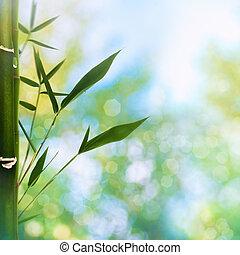 verão, beleza, abstratos, fundos, bokeh, oriental, bambu, capim