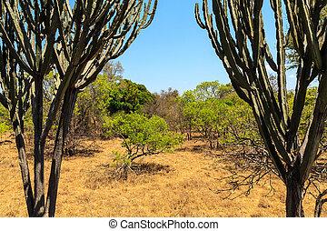 verão, bush, paisagem, africano