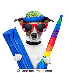 verão, cão, feriados