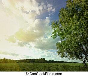 verão, céu, árvore, campo