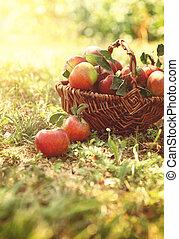 verão, capim, orgânica, maçãs